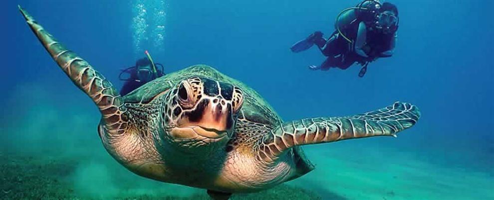 Potápění, Chia, Sardinie