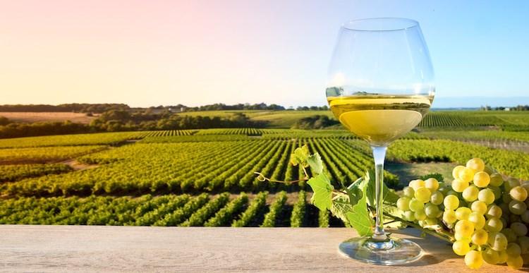 Vinné stezky Sardinie -