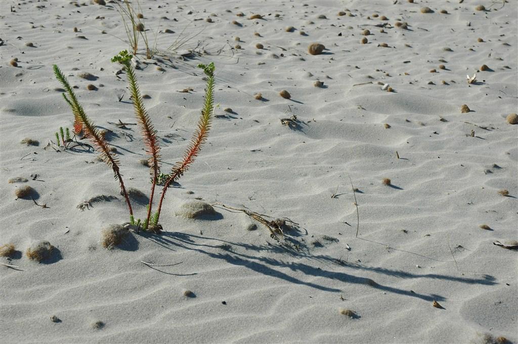 Jemný písek na pláži - CORTE CALA DEI PINI HOTEL CLUB